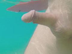 Penis im Wasser
